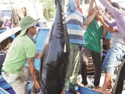 Vietnam acts to meet requirements on IUU control