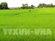 Hau Giang uses more RoK biological products in cultivation