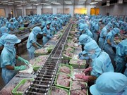 Tra fish exports to China continue to thrive