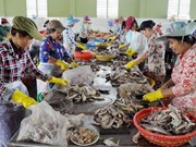 Tra Vinh moves to support SMEs' development