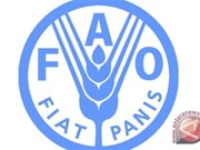 Indonesia, FAO renew cooperation in timber trade