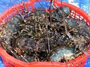 Measures sought to facilitate Vietnam's shrimp export to US