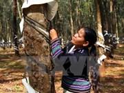 Rubber businesses need sustainable development strategies: workshop
