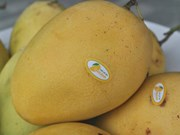 Dong Thap strives to turn mango into key export product