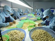 Ha Long city to host 10th international cashew nut conference