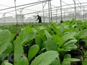 Taiwanese firms boost agricultural partnership with Vietnam