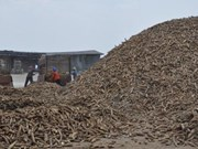 Thailand to export 1.5 million tonnes of cassava