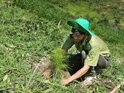 Nearly 57,000ha of alternative forests planted across Vietnam