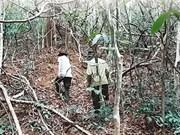 Endangered gaurs losing habitat in national park