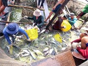 Agro-forestry-fishery exports hit 22.2 billion USD in first seven mont