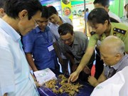Second Ngoc Linh ginseng festival opens in Quang Nam