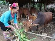 Meeting talks sustainable poverty reduction in ethnic minorities