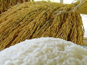 Thailand sees bright prospects for rice exports