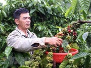 Book promotes Vietnam's geographical indication-registered products