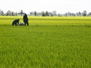 Dong Nai encourages large-scale fields, cooperatives