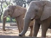 Wild elephants seen in York Don National Park