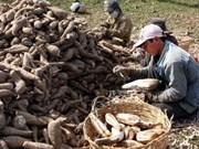 China cassava processors seek partners