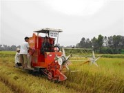 FAO continues aiding VN's rural development