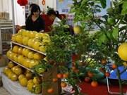 Tet Fair to open in Hanoi