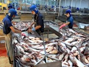 WWF still to remove tra fish from red list