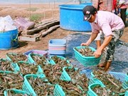 Aquatic products net 320 mln USD in January