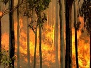 Provinces receive wildfire alert as drought takes hold