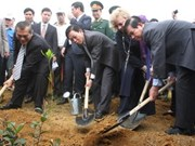 State President launches national tree festival