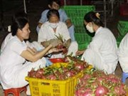 Quality to lift sales of dragon fruit