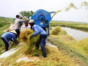 VN introduces potential in agriculture to UK