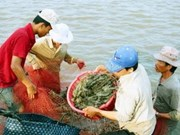 FAO to assist Vietnam to control aquatic diseases