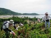 Vietnamese, Japanese volunteers plant forests