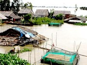 Mekong Delta flood death toll reaches 24