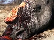 Javan rhino wiped out in Vietnam