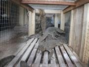 Indonesia, Vietnam combat illegal wildlife trade