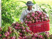 Fruit and vegetable exports to hit 600 million USD