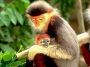 ADB funds biodiversity conservation