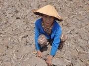 Drought hits summer crop