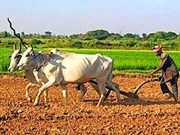 IFAD provides aid for Cambodia's farmers