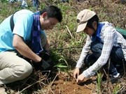 AEON helps Thua Thien-Hue expand forests