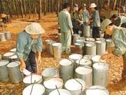 Global rubber talks open in HCM City