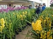 Hanoi works for flower markets blossom during Tet