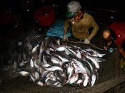 Mekong Delta targets 2 bln USD in tra fish exports