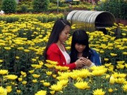 Flower markets add colour to festive pre-Tet