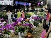 HCM City opens Spring Flower Festival