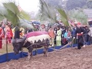 Tuyen Quang: Tay ethnic people's festival