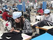Garment businesses see bright signs in export