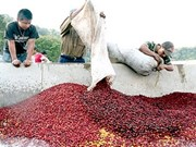 Coffee sector gears up for sustainable growth
