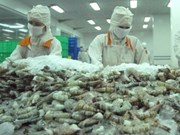 VN's shrimp exporters proved innocent