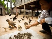 Cambodia's initial success against avian influenza
