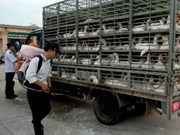 Bac Giang, Hanoi brace for H5N1, H7N9 bird flu